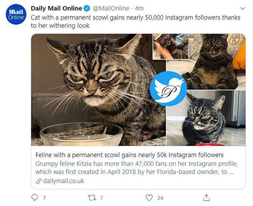 گربهای با اخمهای دائم ۴۷ هزار فالوور دارد +عکس