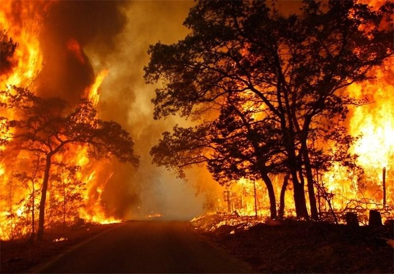 چرا جنگل ها در آتش می سوزند؟
