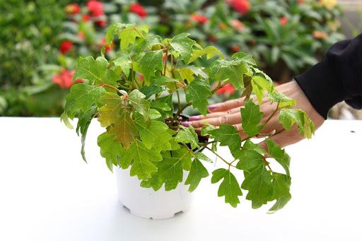 گیاهی کمتوقع که در هر شرایط و مکانی میتواند رشد کند
