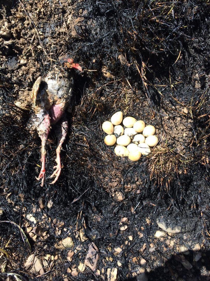 صحنهای ناگوار از آتش سوزی یک باغ در لواسانات + عکس