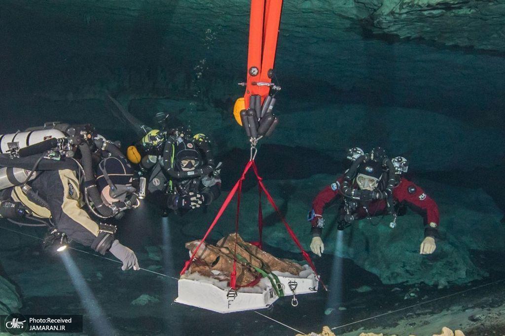 بقایای حیوانات در اعماق آب ها + عکس