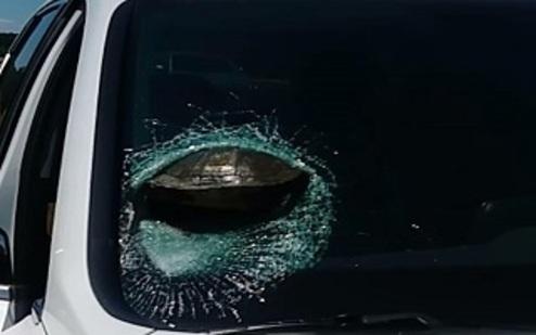 عجیب ترین تصادف خودرو با لاک پشت! +عکس
