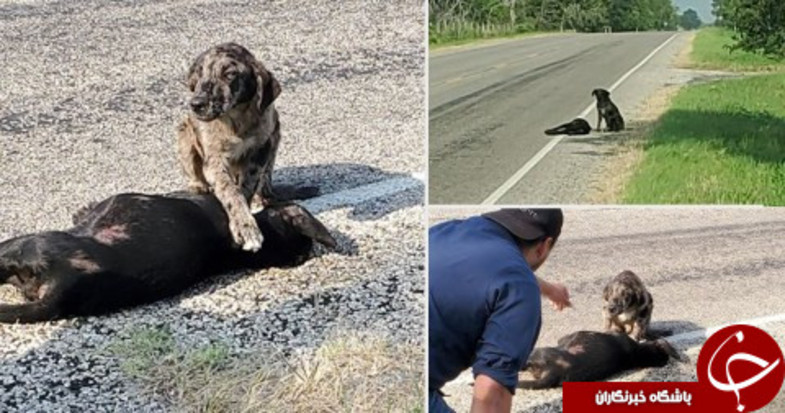 وفاداری یک سگ به خانواده اش سوژه شد! + عکس