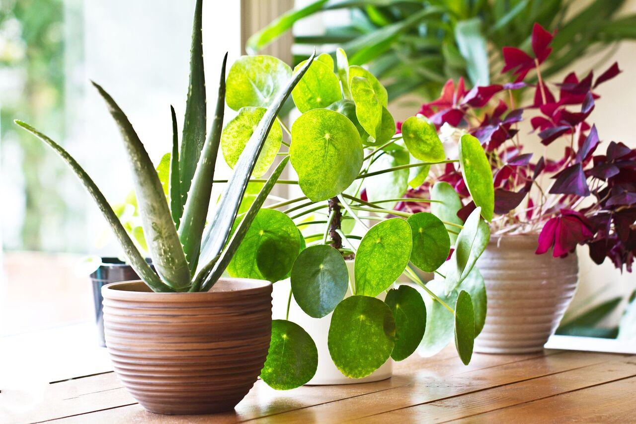 دلایلی که شما را برای نگهداری گیاه در خانه قانع میکند
