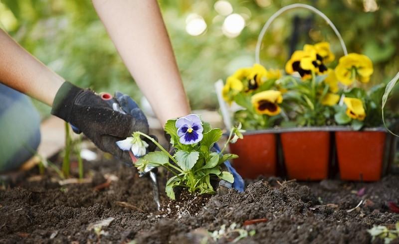 ۴ مرحله ساده برای زنده نگهداشتن گیاهان در خانه