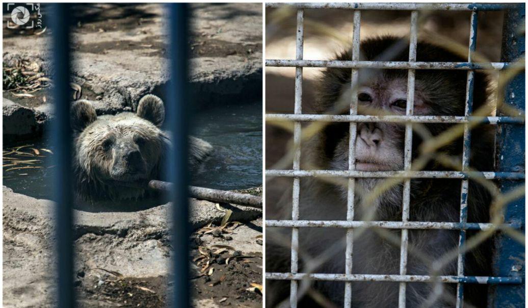 شرایط بد حیوانات باغ وحش هویزه در خوزستان + عکس