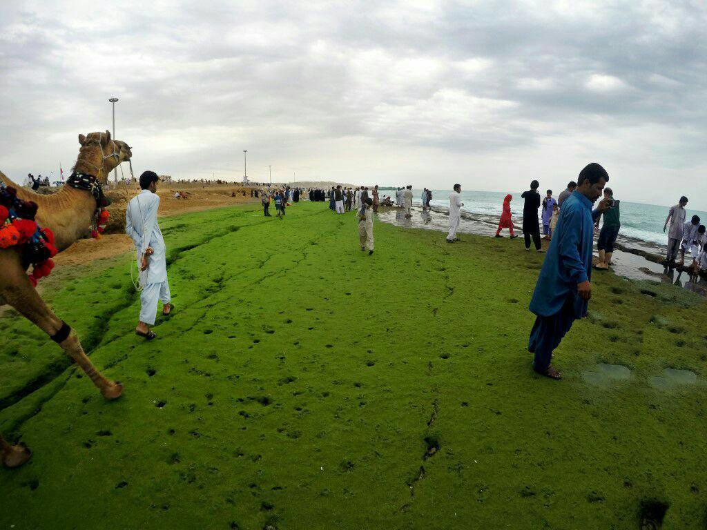 پدیده تعجب آور «ساحل سبز» در مکران بلوچستان + عکس