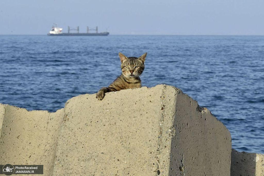 گربهای که به دلیل شیوع کرونا در قرنطینه است + عکس