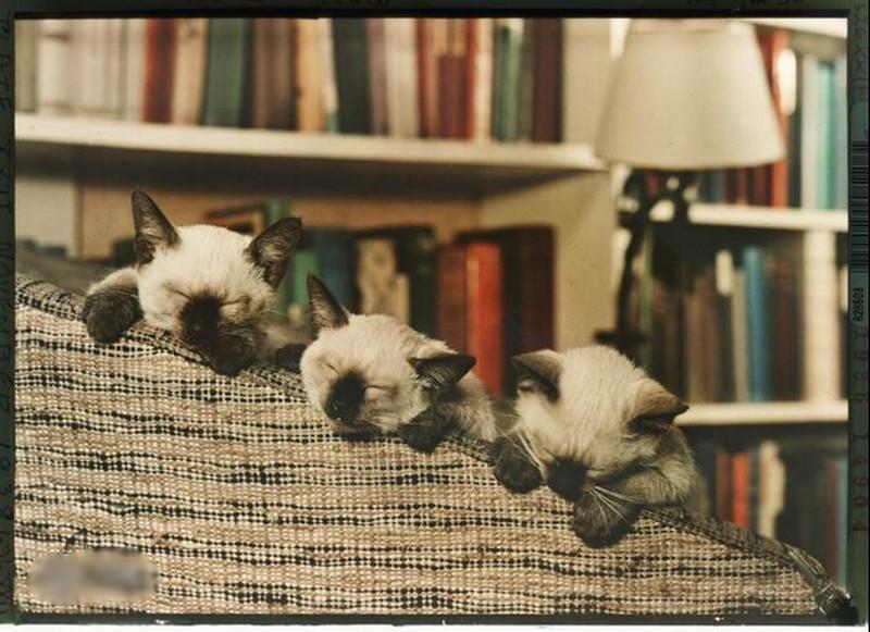 خواب بامزه بچهگربهها سوژه شد +عکس