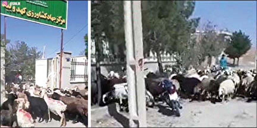اعتراض با روشی نوین در یزد! + عکس