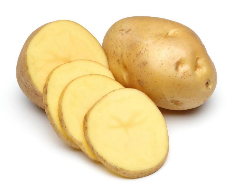 برداشت «سیب زمینی» در همدان+ عکس