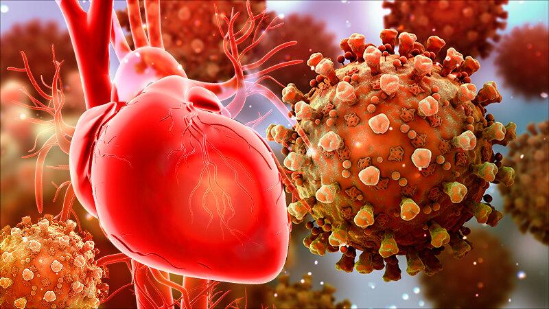 ارتباط مرموز ویروس کرونا و قلب