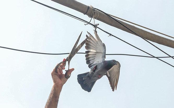 نجات کبوتر در هند + عکس