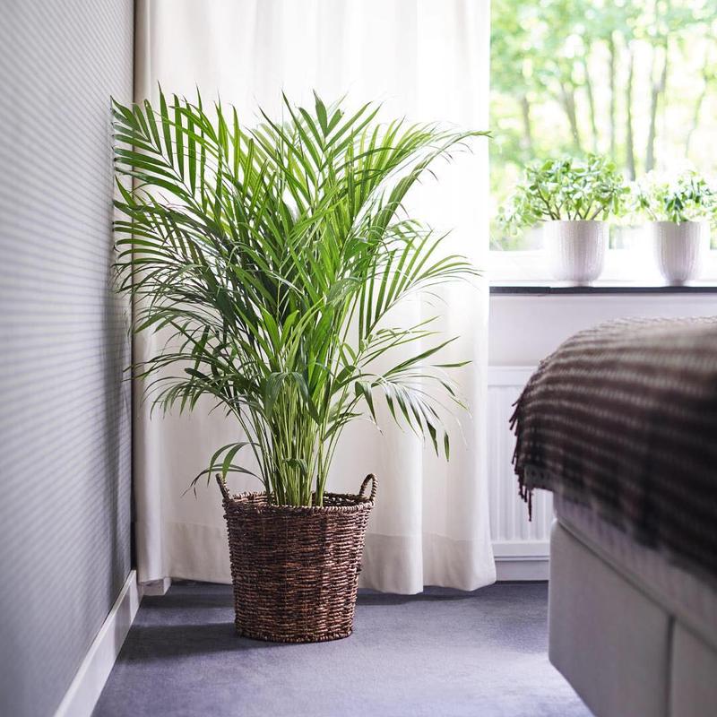 گیاهان خانگی شما آفت دارند؟ از شر آنها خلاص شوید