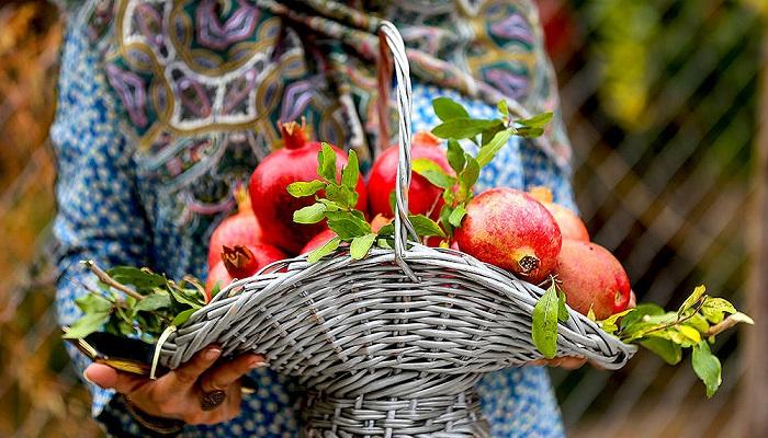 شگفت انگیز و پرخاصیت ترین میوه پاییز و زمستان را بشناسید