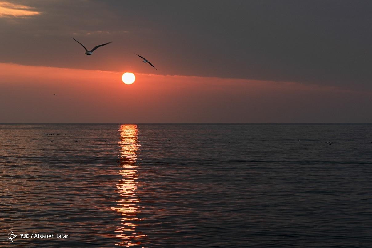 بازگشت شالوها به خلیج فارس + عکس