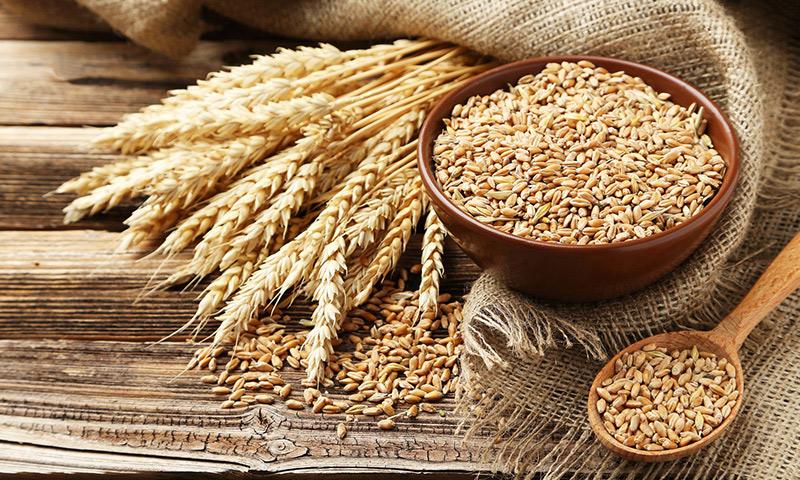 6 مزیت دانه جو برای سلامتی+ مقدار املاح و ویتامین های جو
