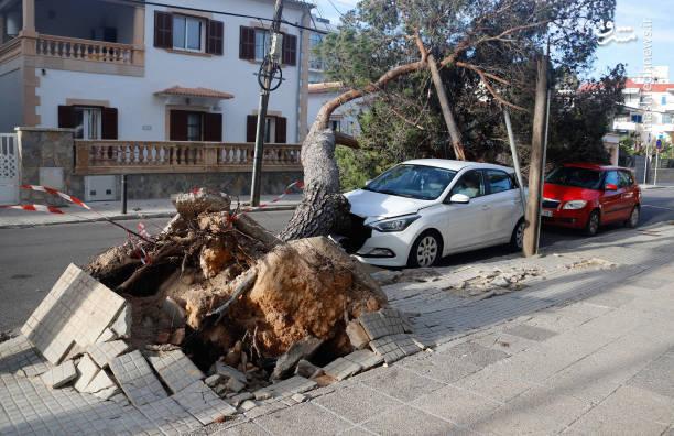 سقوط درختان تنومد بر اثر طوفان در اسپانیا+ عکس
