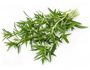 گیاه مرزه ضدعفونی کننده قوی بدن