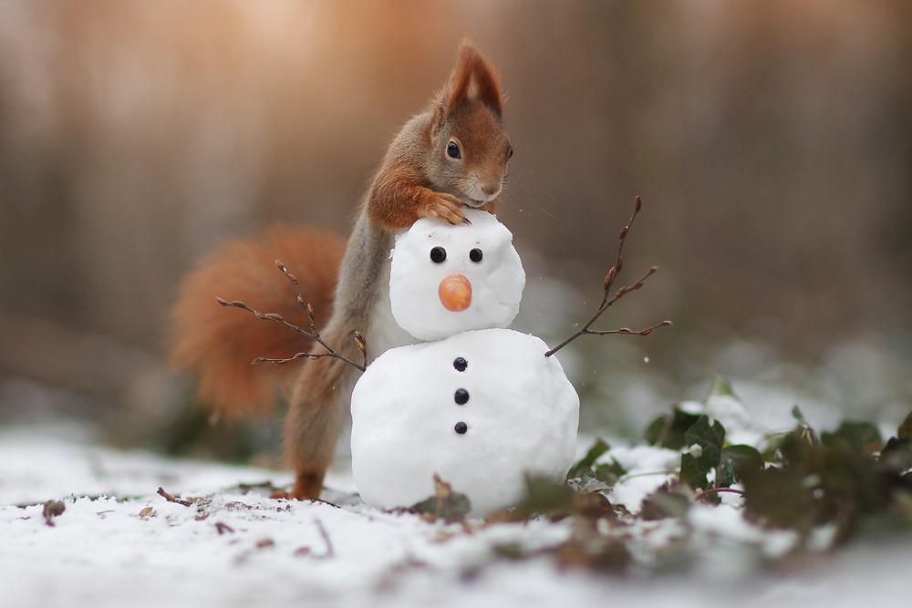 سنجاب بازیگوش و آدم برفی + عکس