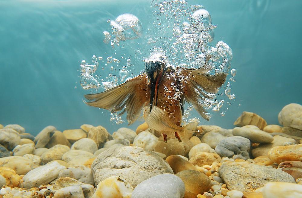 لحظه شکار ماهی در زیر آب + عکس