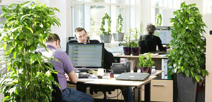 افزایش بازدهی فعالیت در محیط کاری دارای گل و گیاهسه