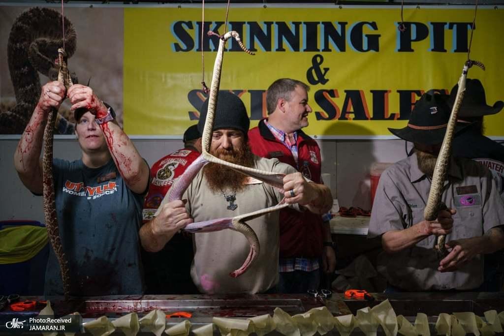 مسابقه کندن پوست مار در آمریکا + عکس