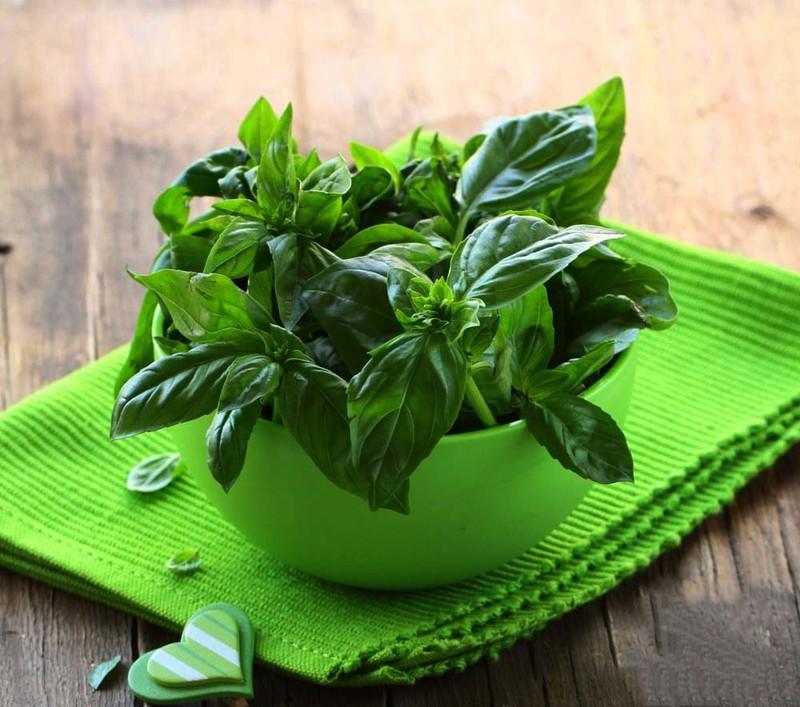 به کمک این سبزی می توانید پشه ها را از خود دور کنید