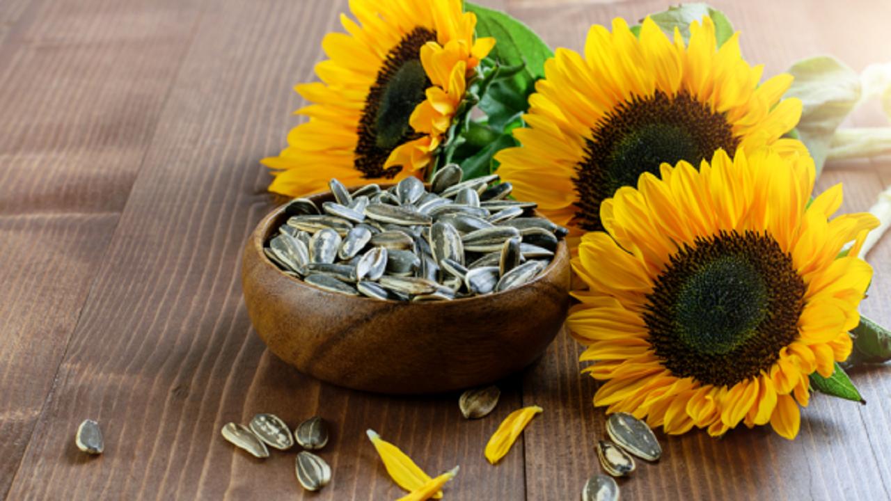 خوردن بیش از حد تخمه آفتابگردان خطرناک است؟
