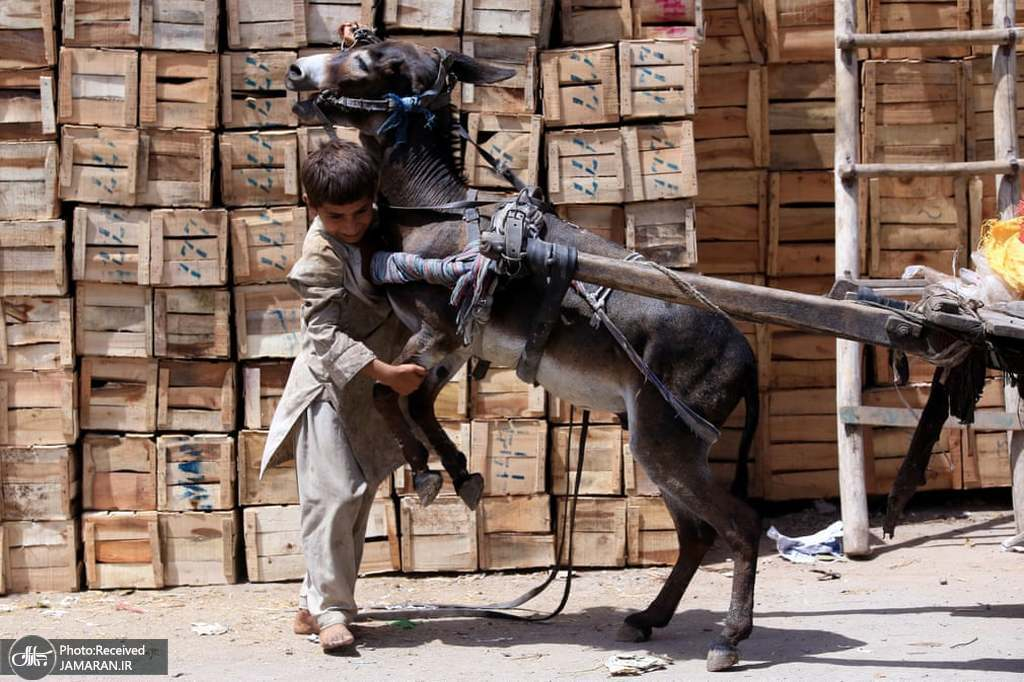 تلاش پسر پاکستانی برای کنترل کردن خرش! + عکس