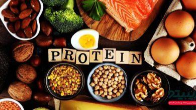 چه مقدار پروتیین نیاز بدنمان را تامین می کند؟