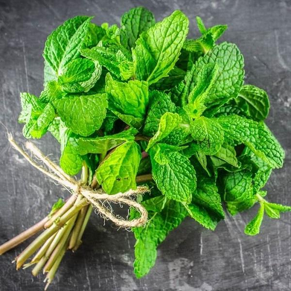 خواص معجزه آسای گیاه نعناع/ ازدرمان آسم تا کاهش وزن