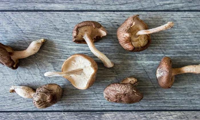 قارچ اعجاب انگیز و فوق العاده برای سیستم ایمنی بدن(+عکس)