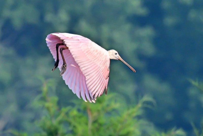 پرنده ای حین پرواز + عکس
