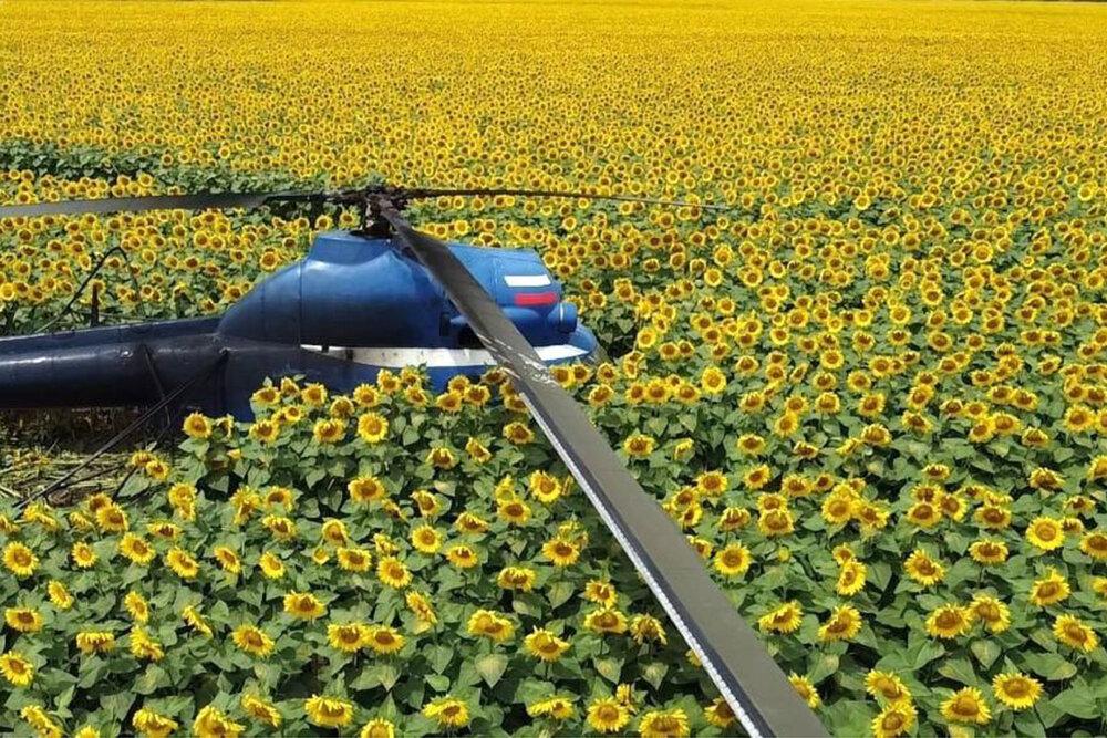 فرود اضطراری بالگرد در مزرعه آفتابگردان + عکس
