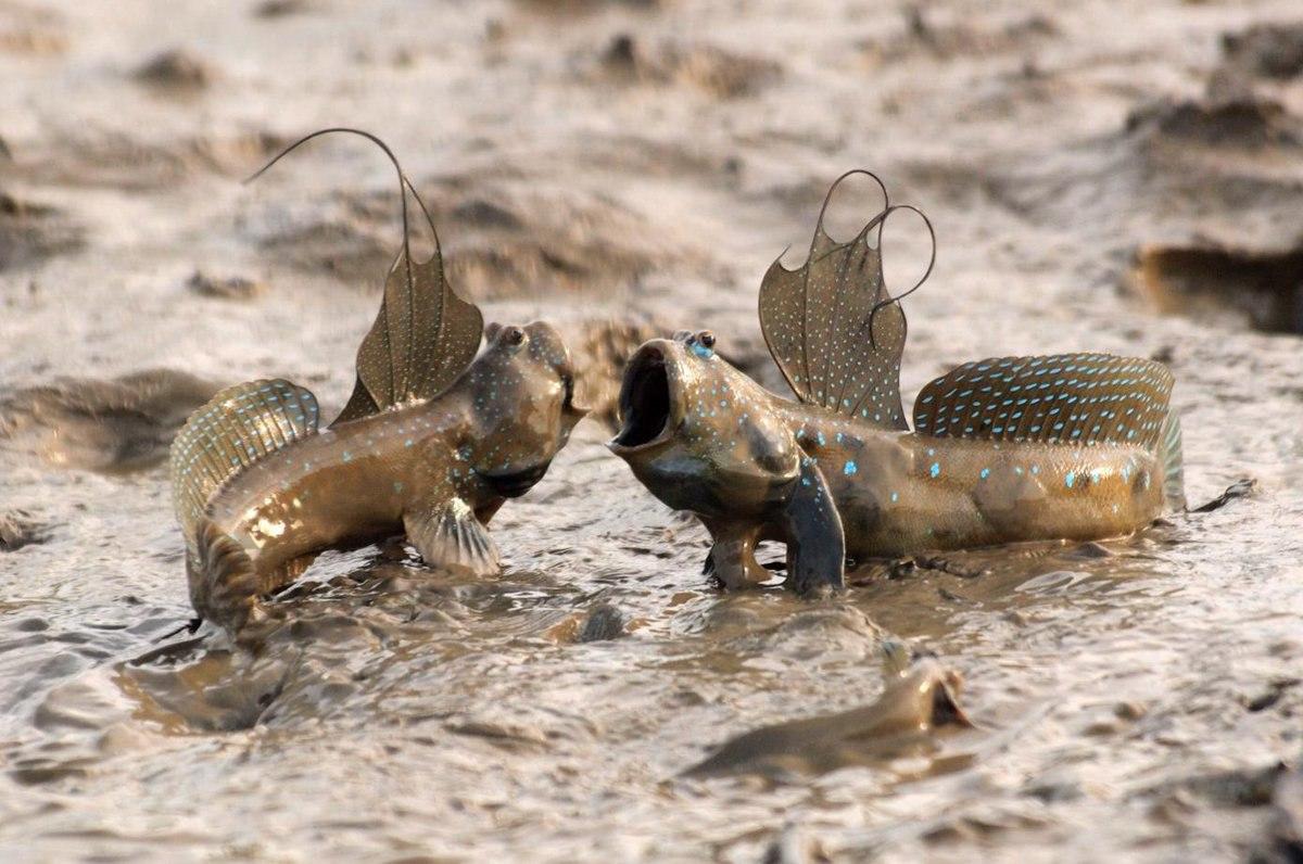 نبرد دو ماهی
