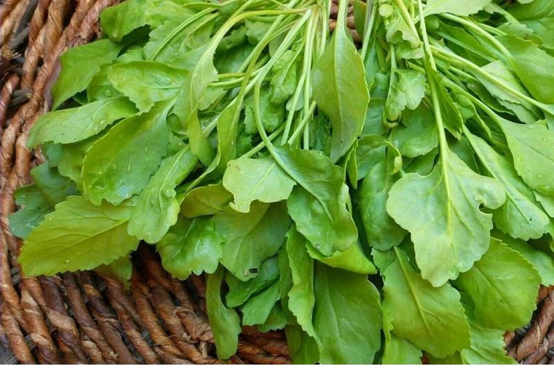 این  سبزی مفید را بشناسید/ از درمان کم خونی تا ضد آسم و سرطان