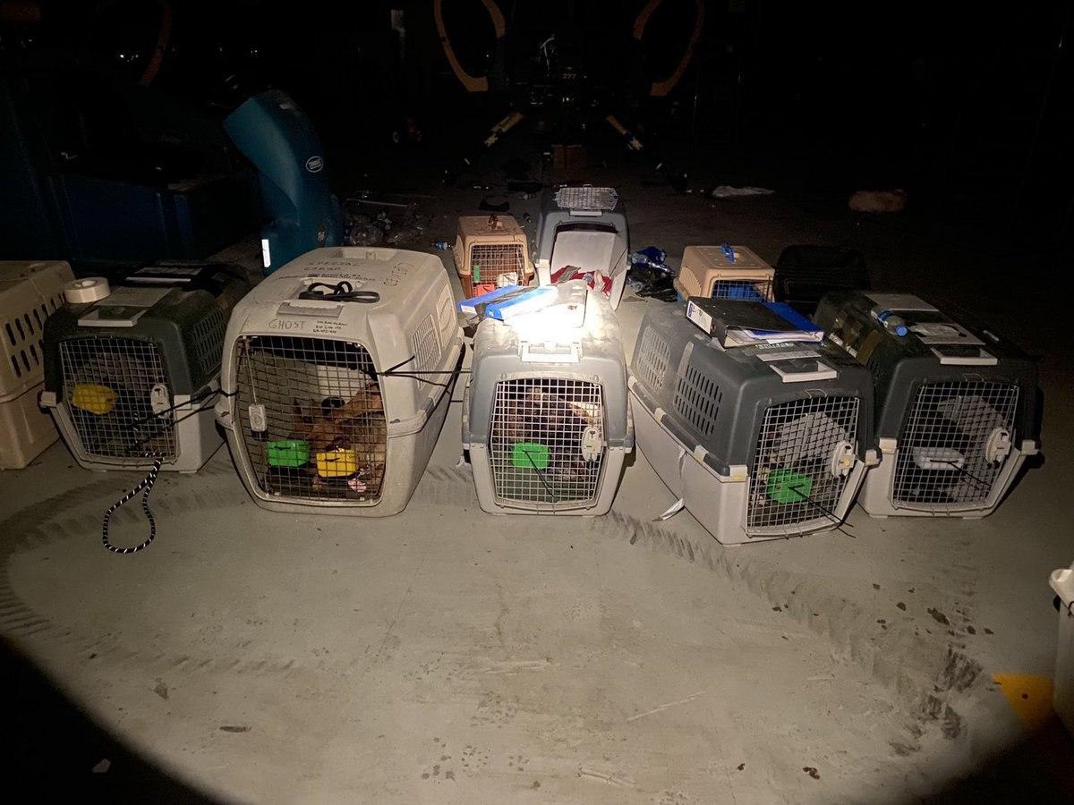 جا ماندن سگهای آموزش دیده آمریکایی در افغانستان! + عکس