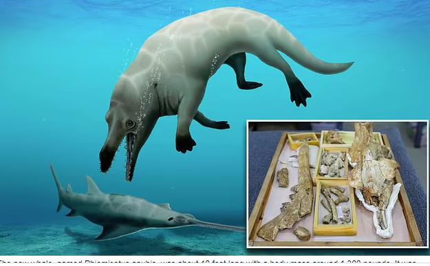 کشف فسیل نهنگ ۴ پا در مصر! + عکس