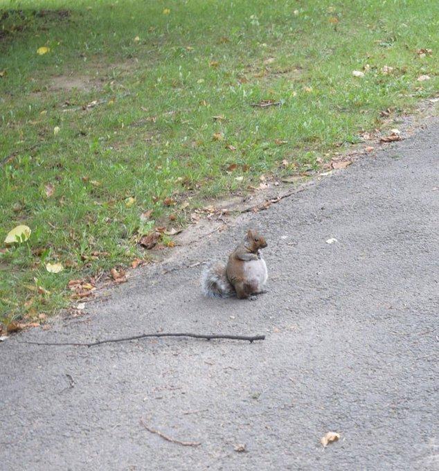 تصویر دیدنی از سنجاب باردار