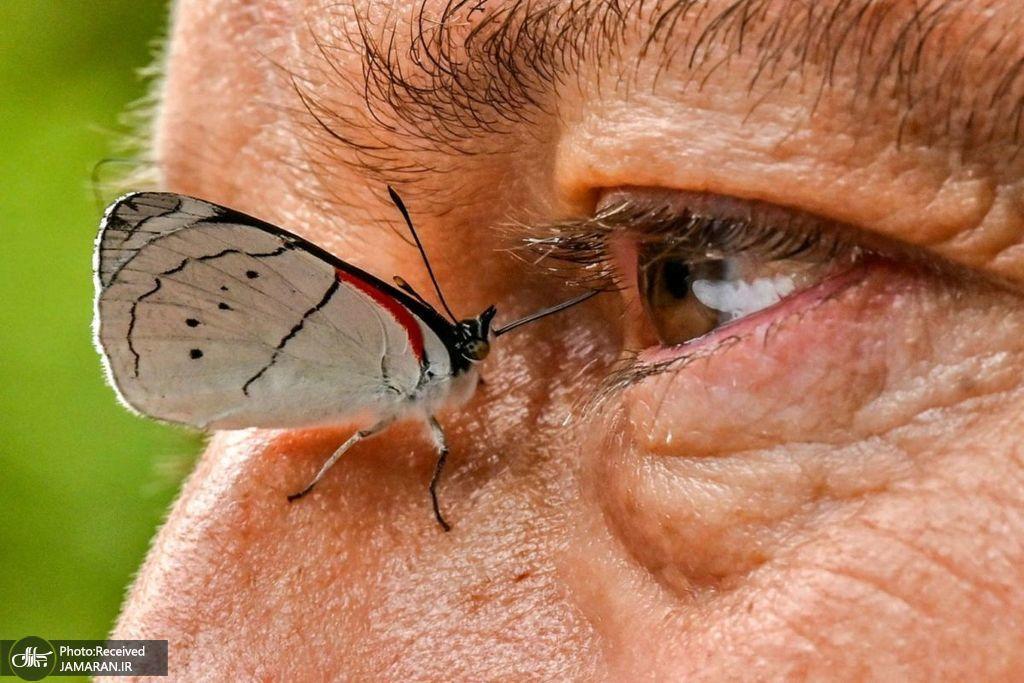 شکار لحظه ای جالب از یک پروانه + عکس