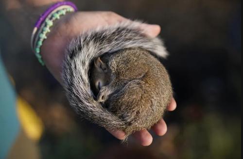 نجات یک سنجاب زخمی از توفان