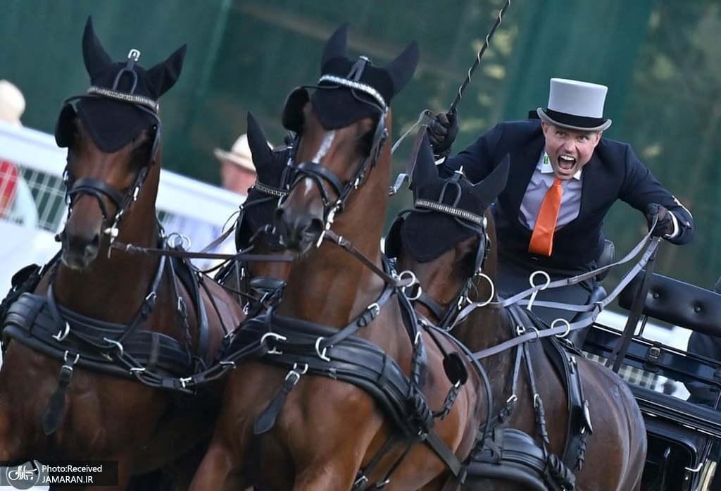 مسابقات کالسکه رانی با اسب اروپا در مجارستان + عکس