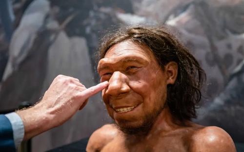ساخت مجسمه مومی انسان اولیه «نئاندرتال» در هلند + عکس