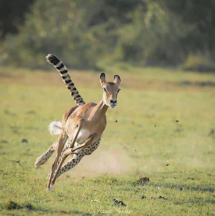 خطای دید جالب در حیات وحش + عکس