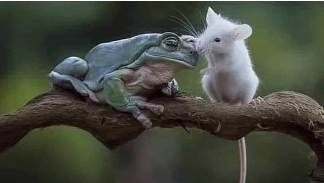 عاقبت دردناک کنجکاوی موش! + عکس