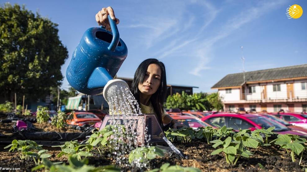 تاکسیهایی که باغ سبزیجات شدند! + عکس