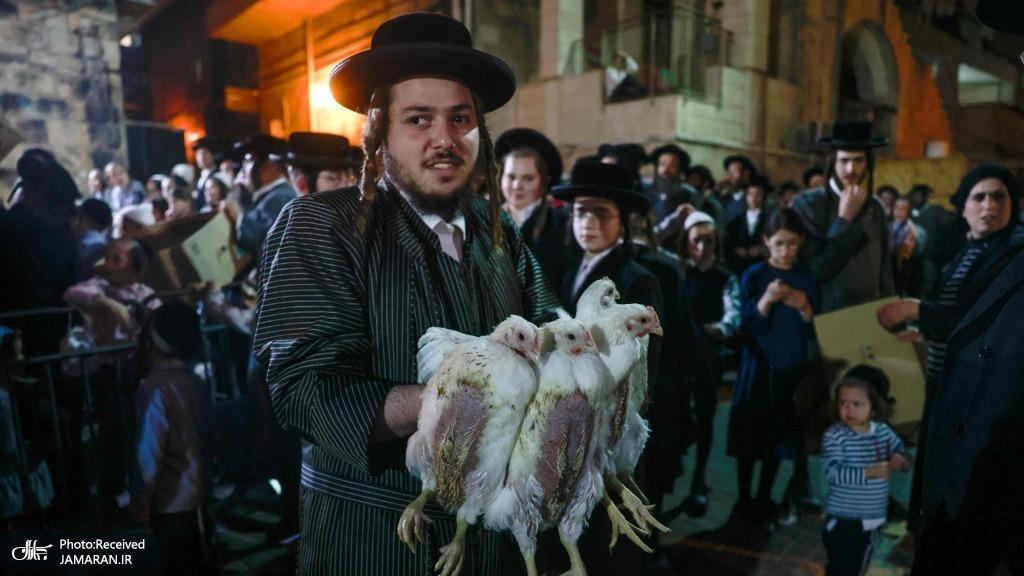 ذبح مرغ در مراسم مذهبی یهودیان + عکس