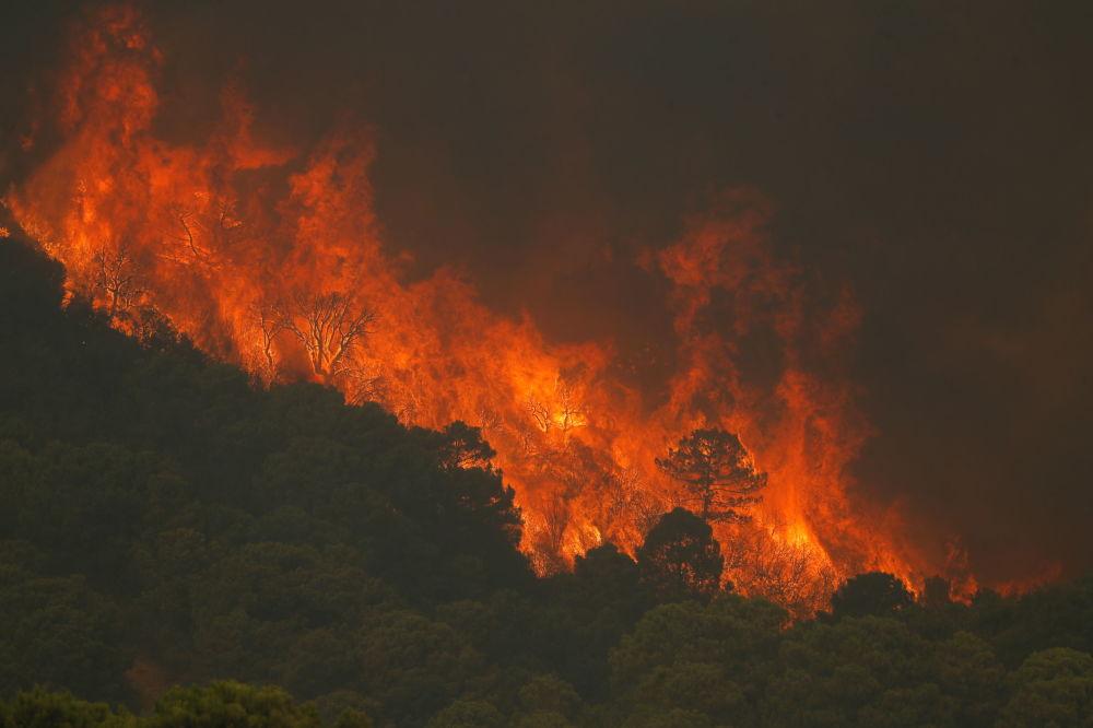 تشدید آتش سوزی های جنگلی در جنوب اسپانیا + عکس