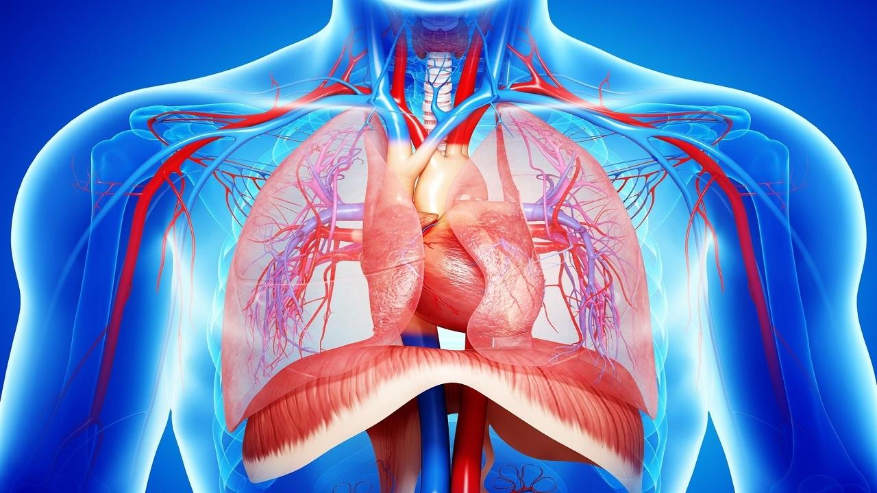 مهم ترین دلایل بروز درد در ناحیه دیافراگم